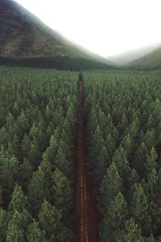 luxury cars - Field of trees trees tree pine pines nature landscape photography green mood mountain fog Beautiful World, Beautiful Places, Landscape Photography, Nature Photography, House Photography, Camping Photography, All Nature, Nature View, Belleza Natural