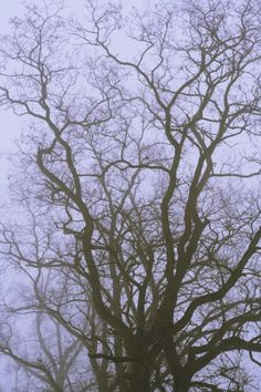 great branches