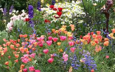 Picture of spring tulips and wildflowers!!!