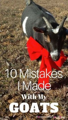 10 Mistakes I made with my goats