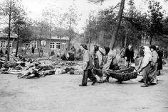 Bergen-Belsenin naisvangit kantavat kuolleita tovereitaan haudattavaksi 15. huhtikuuta 1945, jolloin brittijoukot vapauttivat leirin.