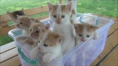 (26) basket of meowing kittens - YouTube