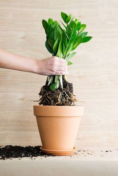 how to properly pot your new houseplant!
