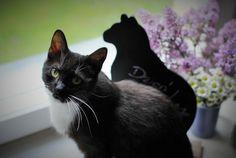 Batik! #kot #blackcat #bez #kwiaty #flowers #cutie