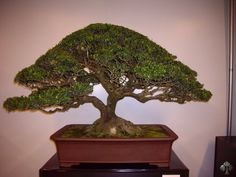 Shows and exhibitions - older - Bonsai Empire
