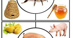 Uzitecna zviratka Animal Worksheets, Animal Activities, Preschool Learning Activities, Math For Kids, Science For Kids, Crafts For Kids, Farm Animals Preschool, Pink Wallpaper Iphone, Kids Education