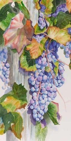 Watercolor painting demonstration of grapes- step 4 The individual grapes begin to take on a rounded shape by emphasizing the shadows on the lower edge of each one. The grapes with violet appear to move forward and in front of the cool blue grapes in the interior.