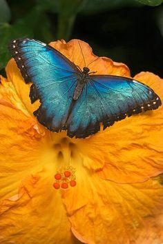 http://haben-sie-das-gewusst.blogspot.com/2012/10/die-qual-der-wahl-brauchen-wir.html  Butterfly on a bloom