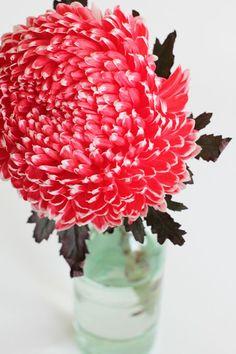 chrysanthemum //Manbo