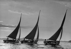 Black and white sailboats