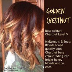 Golden Chesnut
