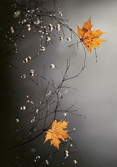 Two thoughts cannot coexist at the same time: if the clear light of mindfulness is present, there is no room for mental twilight. Fall Wallpaper, Flower Wallpaper, Nature Wallpaper, Wallpaper Backgrounds, Fall Pictures, Nature Pictures, Pretty Pictures, Rain Wallpapers, Cute Wallpapers