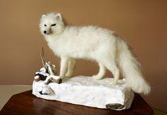 White Fox Arctic Fox needle felted animal por MinzooNeedleFelting