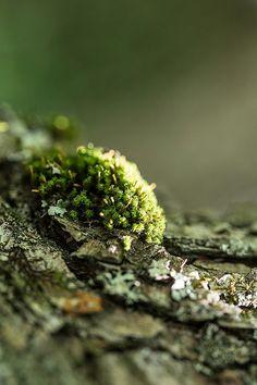 little bit of moss