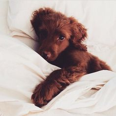 So stinkin' adorable! Puppy Love :: The most funny + cutest :: Free your Wild :: See more adorable Puppies + Dogs :: Animals And Pets, Baby Animals, Funny Animals, Cute Animals, Cute Creatures, Beautiful Creatures, Animals Beautiful, Beautiful Images, Cute Puppies