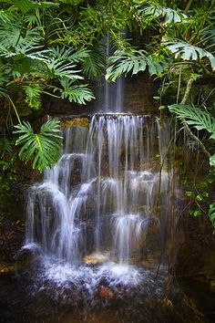 The rainforest. It's amazing! Google Image Result for http://www.uvm.edu/~inquiryb/webquest/sp09/eeckstei/RainforestWaterfall.jpg