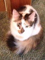 Celebrating cats and cat adoption  http://www.blogpaws.com/2013/06/blogpaws-celebrates-national-adopt-a-catadopt-a-shelter-cat-month.html