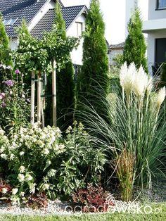 Ogrodowe przygody - strona 415 - Forum ogrodnicze - Ogrodowisko