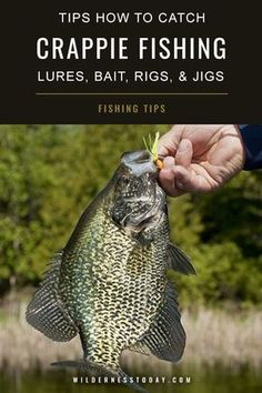Learn for crappie with our crappie fishing tips at www. — get the crappie fishing guide with crappie tips and Crappie Fishing Tips, Fishing Rigs, Fishing Guide, Carp Fishing, Best Fishing, Saltwater Fishing, Kayak Fishing, Fishing Tackle, Crappie Rigs