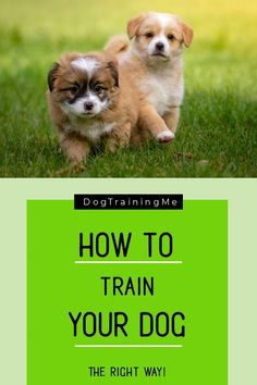 Want to know how to train your dog the right way and bring out the playful obedient dog you know they have in them! Put yourself back in charge and put an end to bad behavior by using these easy tips to train your dog now! #dogtraining #trainyourdog #howtotrainadog