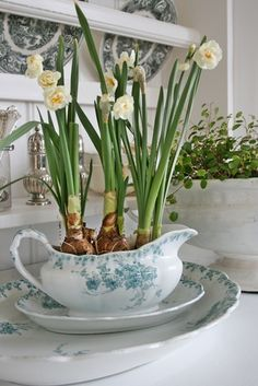 Top your Christmas table with - Pretty paperwhites Place paperwhites in a large compote or bowl. Cover the potting soil with mini ball ornaments in colors that coordinate with your holiday scheme. Noel Christmas, All Things Christmas, Simple Christmas, Winter Christmas, Christmas Paper, Christmas Balls, Christmas Ornaments, Christmas Flowers, Beautiful Christmas