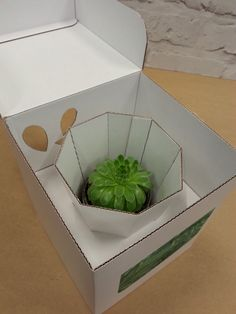 'The Stemm' Final concept 7 Flower Packaging, Cool Packaging, Gift Box Packaging, Packaging Design, Carton Design, Plant Delivery, Tree Shop, Diy Gift Box, Flower Boxes