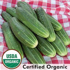 Cucumber, A & C Pickling Organic   Seed Savers Exchange