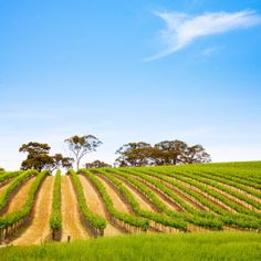 Southern australian vineyard