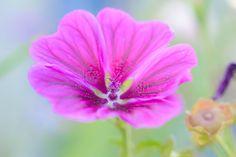 Purple Flower  Macro photo by wilco_snoeijer http://rarme.com/?F9gZi
