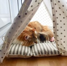 Don't mind me. I'm just here looking mighty adorable and cozy. Dog & Teepee - more than just dog bed. We've created a space that your fur babies will love calling home. Cat Teepee, Teepee Bed, Dog Bed, Pugs, Fur Babies, Stripes, Cozy, Space, Animals