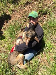 German shepherd who disappeared after drunk-driving accident has been found