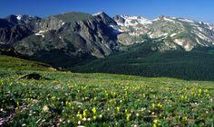 Spring Wildflowers - Rocky Mountain National Park