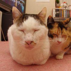 おはヨウカンさん!Good Morning Yohkan-san! #cats #neko #yohkan #ねこ部 - @kachimo | Webstagram