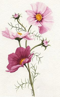 Pink Cosmos | Flickr – Compartilhamento de fotos!
