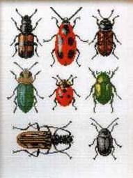 More Beetles & Bugs