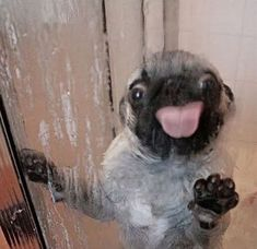 I'm cleaning your shower. You're welcome!