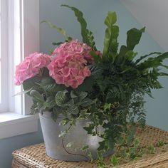 Hydrangea, Japanese Birds Nest, Rabbit Foot Fern, Fittonia, and Ivy 5. Ivy