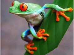 grenouilles vertes dessins - Recherche Google
