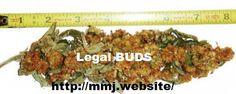 100% LEGAL BUDS http://mmj.website/