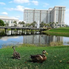 Keep an eye out for feathered spectators while playing a round on Waldorf Astoria Orlando's golf course.