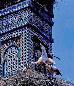 Les rajoles o azulejos – de l'àrab az-zula'ij – tant les de paviment com les de revestiment de parets, són peces ceràmiques impermeables, planes i de poc gruix fabricades amb un suport argilós i recobriment vitri: l'esmalt ceràmic.