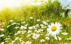 primavera | chegou hoje a primavera uma das minhas estações favoritas