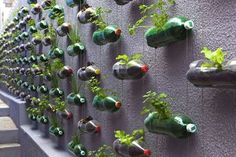 Awesome Vertical Garden With Recycled PET Bottles At Poor Family Home In Sao Paulo : TreeHugger