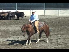 Cutting Horse Training Problems, 3-yr-old, part 1 - YouTube
