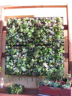 love this hanging succulent garden