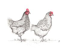Big Red & Saoirse My Images, Rooster, Big, Artwork, Animals, Art Work, Animais, Work Of Art, Animales