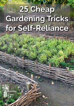 Gardening can be expensive. Here's some tricks to help you get the most from your garden without breaking the budget. Gardening Tips, Organic Gardening, Garden Sink, Garden Beds, Garden Art, Gemüseanbau In Kübeln, Vegetable Garden Planner, Natural Ecosystem, Garden Catalogs