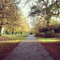 Fall in Kensington Gardens, London