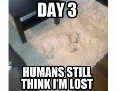 day 3 humans still think I'm lost - http://www.jokeoftheday.me/day-3-humans-still-think-im-lost-2/