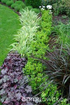 Ogród mały, ale pojemny;) - strona 39 - Forum ogrodnicze - Ogrodowisko #ContemporaryGardenLandscaping